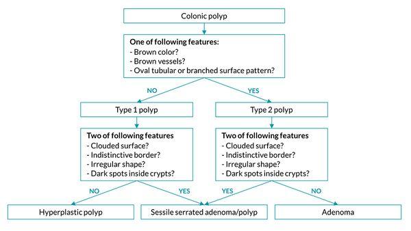 Sessile serratierte Adenome und die neue WASP-Klassifikation